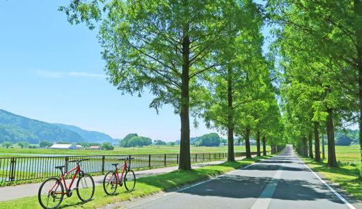 びわ湖近くの絶景ロード『マキノのメタセコイア並木道』