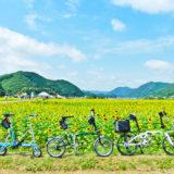 佐用町の「ひまわり畑」の風景