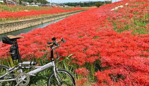 愛知県|毎年200万本の彼岸花が咲く『逢妻女川自転車道』の区間