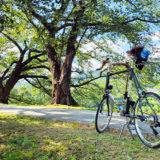 夏の背割堤の桜並木とミニベロロード