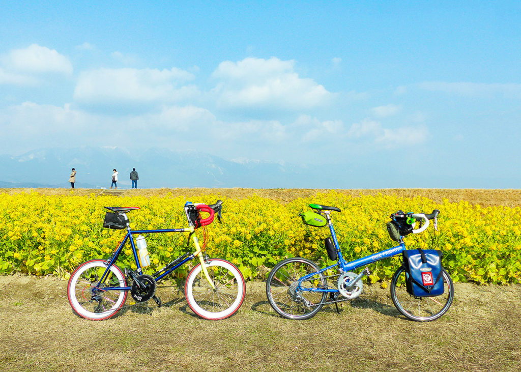 第1なぎさ公園の早咲きの菜の花(カンザキハナナ)が咲く風景