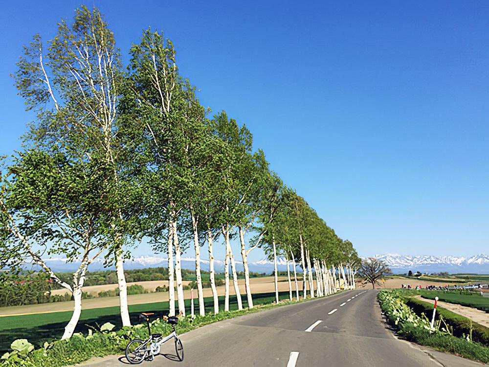 北海道・美瑛の「セブンスターの木」付近の白樺並木の風景