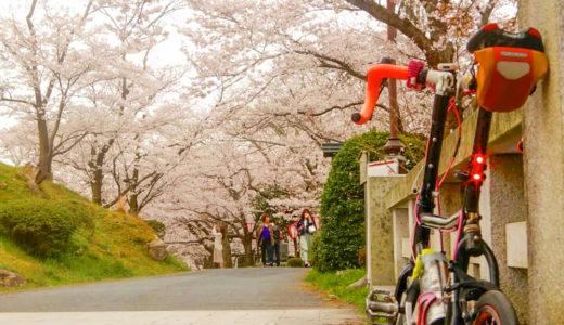 鳥取県|春夏秋に桜の木がある風景が楽しめる『鹿野城跡公園』