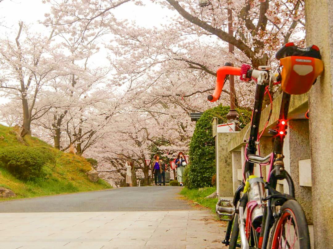 鳥取市内の桜花・紅葉の名所「鹿野城跡公園」の風景