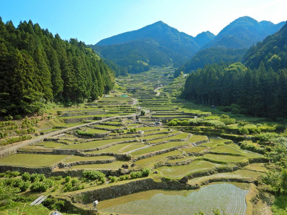 「四谷の千枚田」の棚田の風景